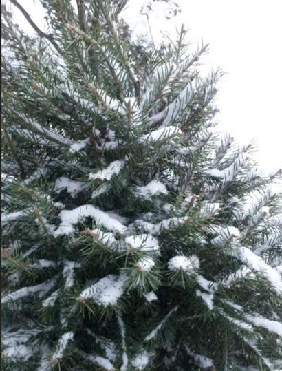 christmas tree snow 42.PNG