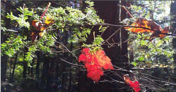 282 leaf.PNG