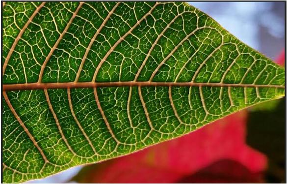 leaf 310.PNG