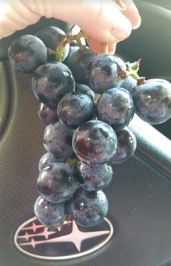 411 grapes b.PNG