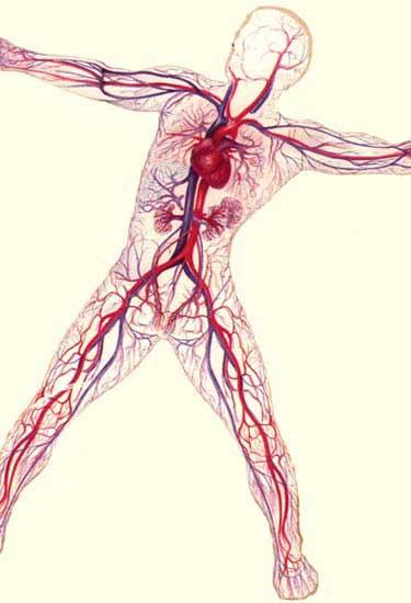 485 circulatory
