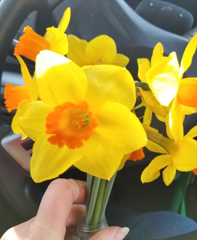 672 daffodil