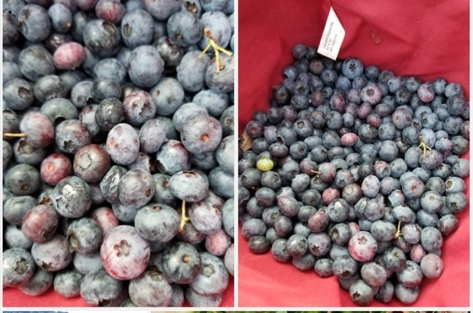906 blueberries a